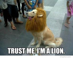 trust-me-Im-a-lion